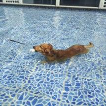 プール大好き