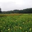 昭和記念公園(コスモ…
