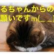 【iPhoneのフィ…