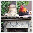 高知県庁西入口の県鳥…