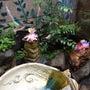 お庭をバリ風テイスト…