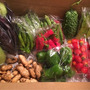 新鮮野菜入荷してます