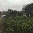又々、雨ですが