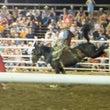 馬ロデオと牛ロデオの…