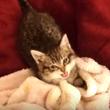 猫の動画集 その7