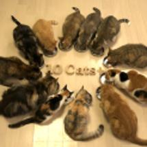 12匹の猫の輪