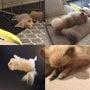 眠りながら尻尾をふる…