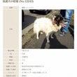☆宮崎県都城の迷子犬…