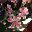 今週のテーブル装花と…
