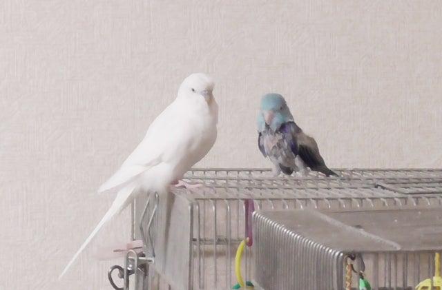 レティとレミィ