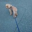 久しぶりなレオン散歩