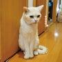 猫の集会開催中!