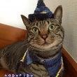 猫ちゃん魔法使い
