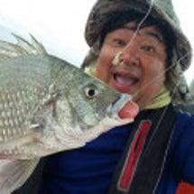 クロダイ釣れました!