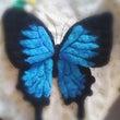 蝶できました!
