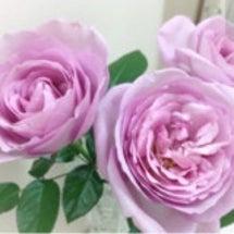 メインの薔薇はローズ…