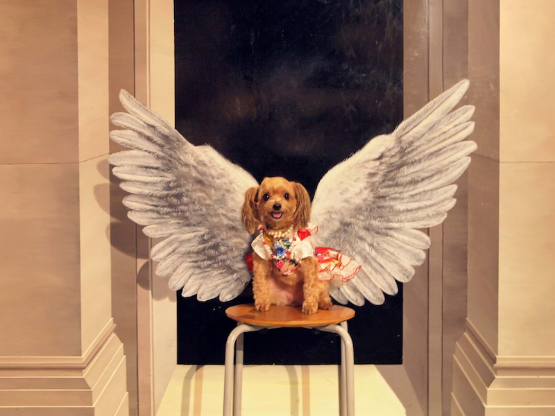 天使のティナ
