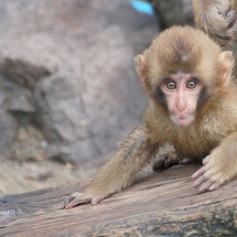 森林公園の小猿