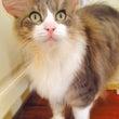 ネズミ耳猫&東大ラン…