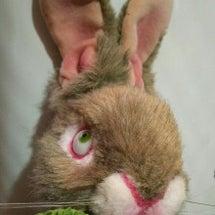 『意地悪ウサギ完成』