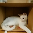 子ネコの体重測定(^…