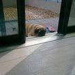 我家にトドが!