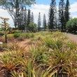 ハワイ観光の王道「ド…