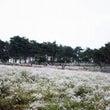 【韓国旅行】秋の旅行…