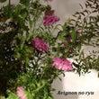 旬の花材で伸びやかな…