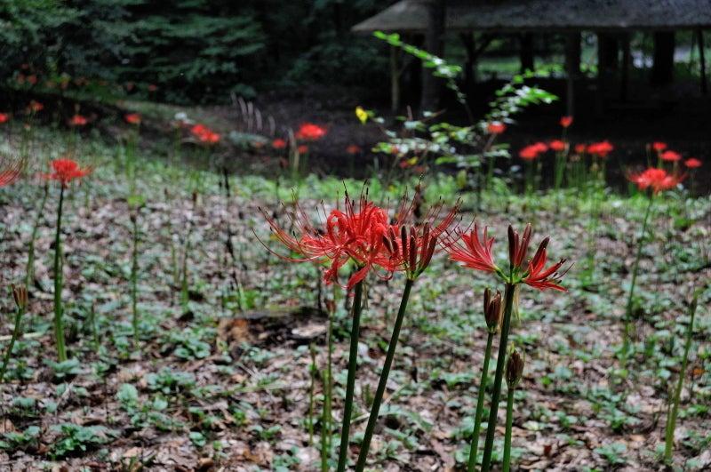 赤城自然園605