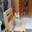 福来る招き猫