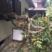 家から木が生えてる?…