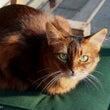 ■ネコ 軟便猫が皮膚…