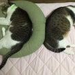猫ダイエット作戦