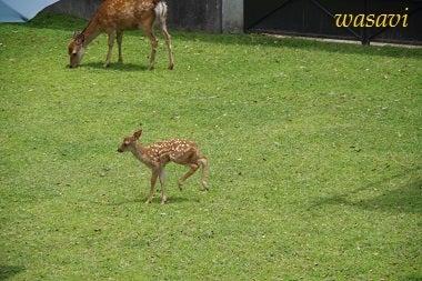 鹿パラダイス9