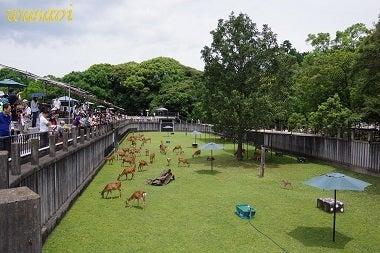 鹿パラダイス4