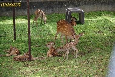 鹿パラダイス7