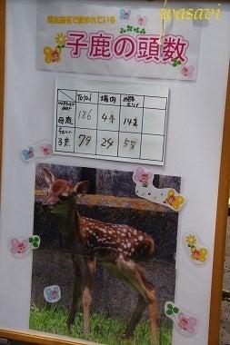 鹿パラダイス2