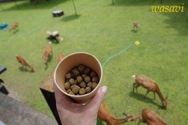 鹿パラダイス5