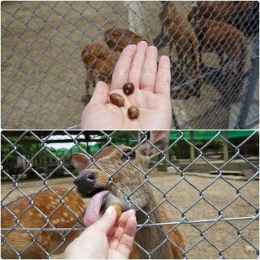 鹿パラダイス11