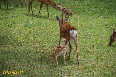 鹿パラダイス8
