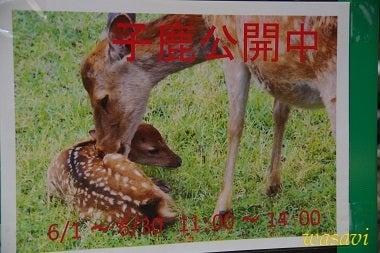 鹿パラダイス1