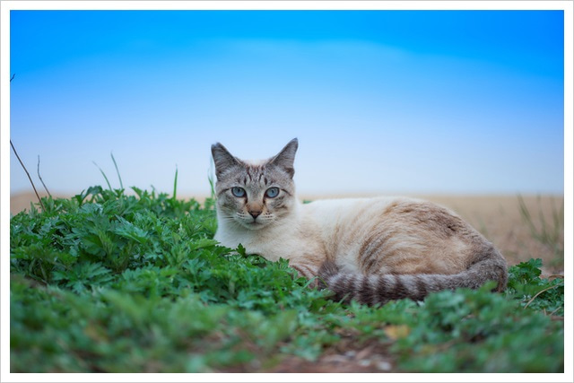 森の美しいねこたち~地域猫~