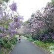 シドニー春かな?