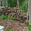 森の冬支度(薪造り)