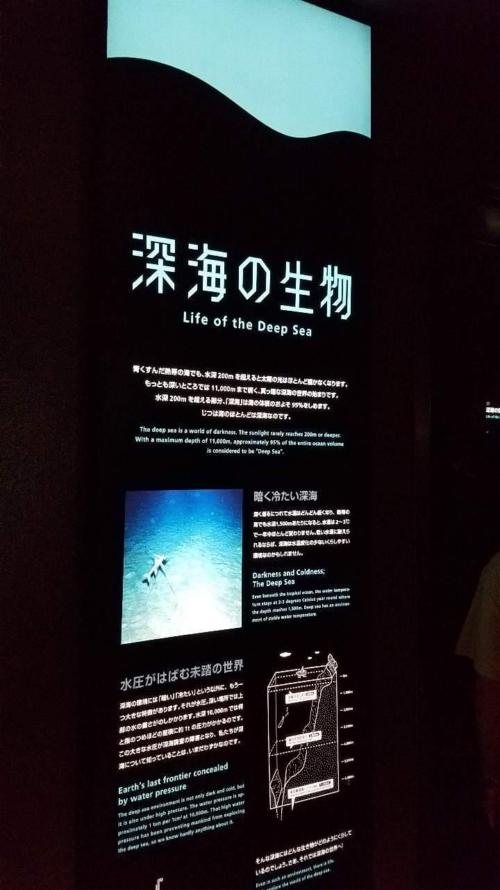 水族館19