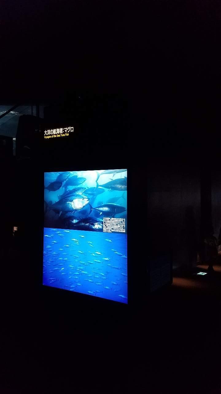 水族館23