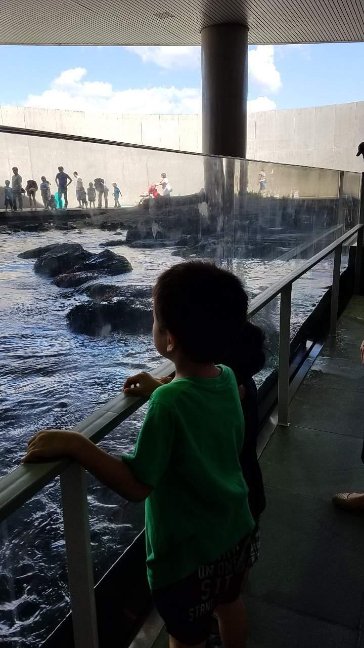 水族館31