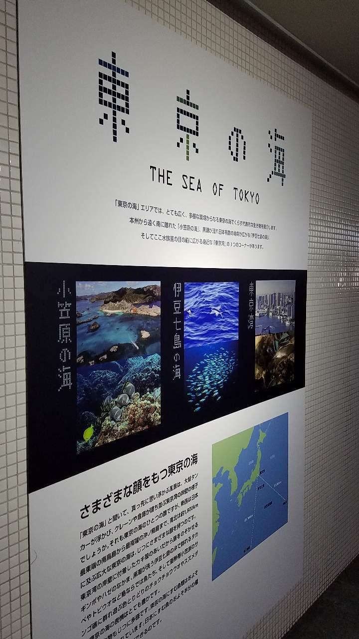 水族館39