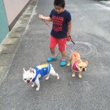 犬の散歩トレーニング…